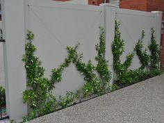 For street appeal - grow jasmine in cross pattern on top of modular wall fence Side Garden, Garden Trellis, Easy Garden, Herb Garden, Indoor Garden, Amazing Gardens, Beautiful Gardens, Garden Wall Designs, Fence Landscaping