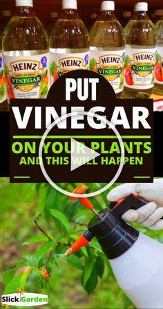 Vegetable Garden Tips, Veg Garden, Garden Care, Easy Garden, Lawn And Garden, Ants In Garden, Diy Herb Garden, Porch Garden, Tomato Garden