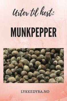 Urter til hest: Munkpepper. brukes til hormonelle hopper, brunst Horses, Nature, Horse