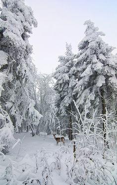 #snowy wonderland...