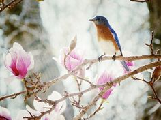 Jane Magnolia Flowers and A Bluebird by Catcher In My Eye, via Flickr