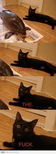 Cats Humor Laughing So Hard Hilarious Super Ideas I Love Cats, Crazy Cats, Cute Cats, Funny Cats, Cats Humor, Funny Love, Haha Funny, Funny Memes, Hilarious