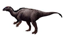 Camptosaurus (/ˌkæmptɵˈsɔrəs/ kamp-to-sawr-əs) is a genus of plant-eating, beaked ornithischian dinosaurs of the Late Jurassic period of western North America. The name means 'flexible lizard', (Greek καμπτος/kamptos meaning 'bent' and σαυρος/sauros meaning 'lizard').