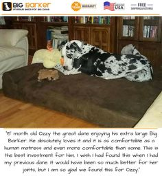 "Customer photo. To get this bed, https://bigbarker.com/  ""15 month old Ozzy the great dane enjoying his extra large Big Barker. He absolutely loves it and it is as comfortable as a human matress and even more comfortable than some. This is the best investment for him, I wish I had found this when I had my previous dane. It would have been so much better for her joints, but I am so glad we found this for Ozzy.""  #americanmadedogbeds #dogbedlargebreed #dogbedluxury"