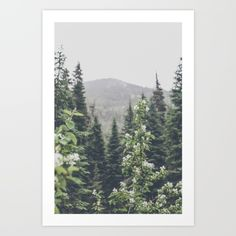 Forest Rain Art Print