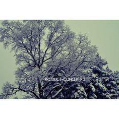 Концепция Продукта. Качественные продукты.: #природа#зима#красота#снег#россия#концепцияпродукт...