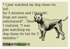 This is totally me! Classy Quotes, Dog Quotes Funny, Yes I Did, Totally Me, Sign I, Got Him, Confused, True Stories, Puppy Love