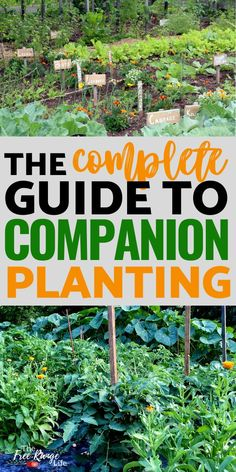 Companion planting is a great way to control pests and increase yields and space in your vegetable garden. Learn how to use companion planting in your garden- including trap crops, attracting benefici Tomato Companion Plants, Companion Gardening, Vegetable Garden Planning, Home Vegetable Garden, Vegetable Garden Layouts, Veggie Gardens, Gardening For Beginners, Gardening Tips, Tips