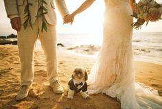 Just Maui'd - Andaz - Groom, Bride, & Pup - Anna Kim Photography