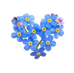 flower language blue forget me