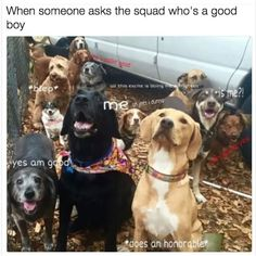 Fresh Animal Pictures Memes of the Day - 21