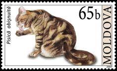 Moldova Cat Stamp