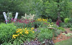 plant in drifts of colour, form and texture- Monarda, goatsbeard, ligularia, daylilies, nepeta, heuchera, sedums and low grasses.