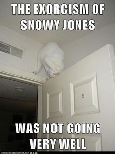 Dump A Day Funny Animal Pictures - 60 Pics | See more about ninja cats, cats and funny jokes.