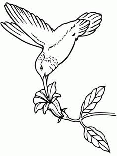 Hummingbird Coloring Book Page This Is Drinking From A Tropical Flower You Will Find Lot More Birds Pages In The Gallery