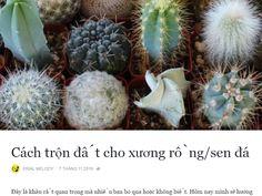 Cách trộn đất cho xương rồng/sen đá  https://www.facebook.com/notes/erial-melody/c%C3%A1ch-tr%E1%BB%99n-%C4%91%E1%BA%A5t-cho-x%C6%B0%C6%A1ng-r%E1%BB%93ngsen-%C4%91%C3%A1/566466846883716 #cactus #cactos #cactii #cacti #cactilove #cactilover #welovecacti #xuongrong #senda #succulent #succulents #succulove #succulovers #cactiofinstagram #hochiminhcity #saigon #vietnam #erialshop #plants #plant