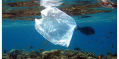 Image result for single use plastic