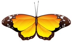butterfly-clip-art-1733416.png