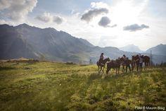 horse treking in Sorenberg Wilderness, Wildlife, Horses, Mountains, Nature, Travel, Naturaleza, Viajes, Horse