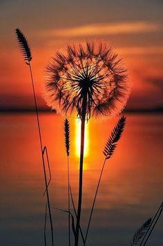 Pôr do sol + flores <3