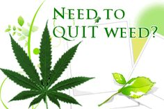 If you would like to know what former long term marijuana smokers did to quit, you can check the 'quit marijuana' programs offered on-line.