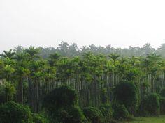 Trip to Kerala 2016