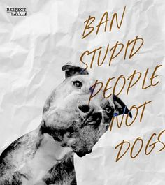 Uplifting So You Want A American Pit Bull Terrier Ideas. Fabulous So You Want A American Pit Bull Terrier Ideas. Dog Shaming, Bull Terrier Dog, Terriers, Pit Bull Love, American Pit, Pitbulls, Dogs Pitbull, Pitbull Pics, Rottweilers