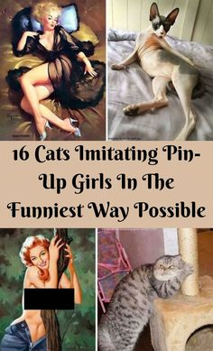 Cats are extremely random and often do some really weird and random things you would never expect them to do. #16Cats #Imitating #PinUpGirls #FunniestWay