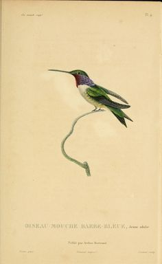 The Biodiversity Heritage Library works collaboratively to make biodiversity literature openly available to the world as part of a global biodiversity community. Vintage Bird Illustration, Engraving Illustration, Illustration Art, Vintage Birds, Vintage Flowers, Charles Darwin, Bird Prints, Animal Prints, Hummingbird Art