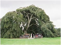 The wedding tree.