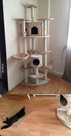 Yay! The new cat tower is here... Why do I even bother?