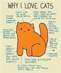 Why we love cats!