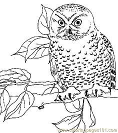 Bengalese Eagle Owl Coloring page Pinterest Owl