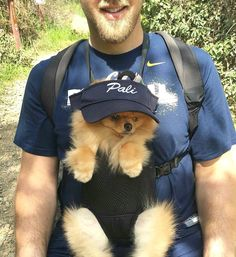 Marvelous Pomeranian Does Your Dog Measure Up and Does It Matter Characteristics. All About Pomeranian Does Your Dog Measure Up and Does It Matter Characteristics. Cute Puppies, Cute Dogs, Dogs And Puppies, Doggies, Animals And Pets, Baby Animals, Cute Animals, Outdoor Dog Toys, Pet Sitter