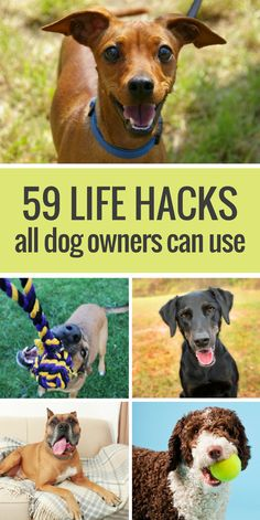 59 Awesome Life Hacks All Dog Owners Can Use