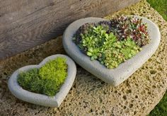 zwei-herzen-aus-beton-gartenfiguren-selber-machen - grüne pflanzen