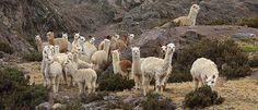 Kig forbi Happy Lama og se alt fra fairtrade plaider til skønne sweatre.