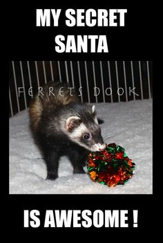 pin ferret meme on - photo #14