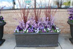 spring planting with lavender eucalyptus