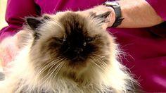 Veterinarian Warns of Risk of Domestic Cats Contracting Bobcat Fever