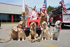 Comfort Dogs Are Flown Into Orlando to Help Survivors Cope   My Modern Met