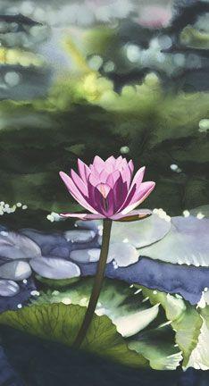 waterlily.     Kathleen Alexander