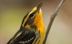 New research shows that small habitats can add up to a big difference.