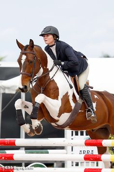 I've always dreamed of having a pinto eq horse!