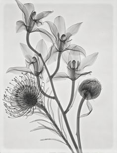 protea, orchids and peonie