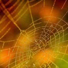 I choose to revel in the hard work of the spider (as long as the spider's not after me), and love to watch the pattern evolve.