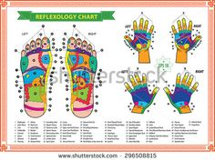 Illustration about Foot reflexology chart with accurate description of the corresponding internal organs and body parts. Vector illustration over white background. Illustration of care, massage, natural - 40895583 Acupuncture Points, Acupressure Points, Soap Note, Map Artwork, Reflexology Massage, Muscle Anatomy, Sports Massage, Banner Printing, Massage Therapy