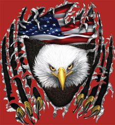 Patriotic Bald Eagle.I think these would be one cool tatoo.