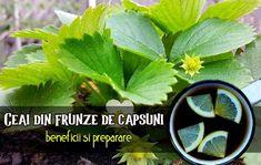 Natural Health Remedies, Herbs, Garden, Nature, Medicine, Plant, Health And Wellness, Garten, Naturaleza