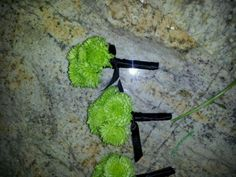 Mens boutineers made with green button mums